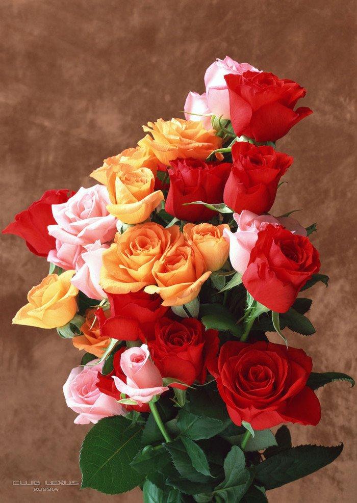 Цветы красивой девушке картинки, открытки